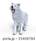 狼 イヌ科 動物のイラスト 33409784