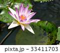 スイレン ブルーミング 開花の写真 33411703