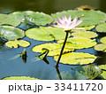 スイレン ブルーミング 開花の写真 33411720