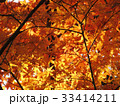 もみじ 紅葉 秋の風景 33414211