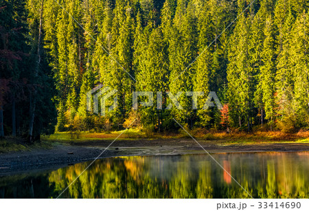 spruce forest with lake at sunrise 33414690