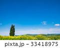 ケンとメリーの木 北海道 晴れの写真 33418975