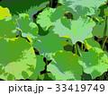 蓮の葉 33419749