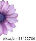 背景 花 デイジーのイラスト 33422780