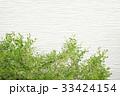 外壁と植木 33424154