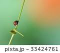 てんとう虫 昆虫 虫の写真 33424761