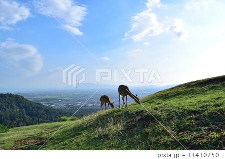 若草山山頂の鹿の親子と奈良盆地の眺望 33430250