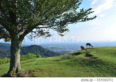若草山山頂からの奈良盆地の眺望と草を食む鹿 33430251