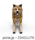 狼 イヌ科 動物のイラスト 33431170