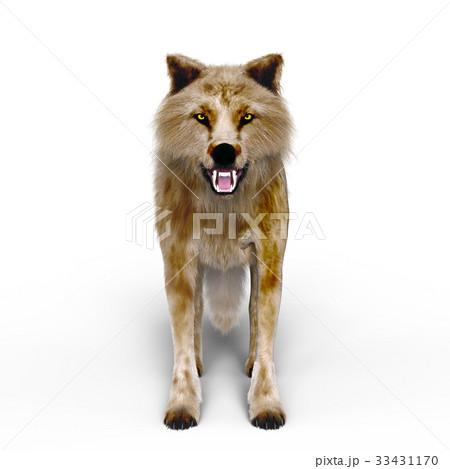 オオカミ 33431170