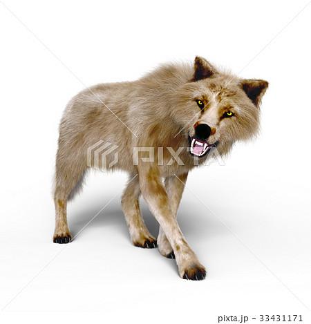 オオカミ 33431171