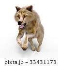 オオカミ 33431173
