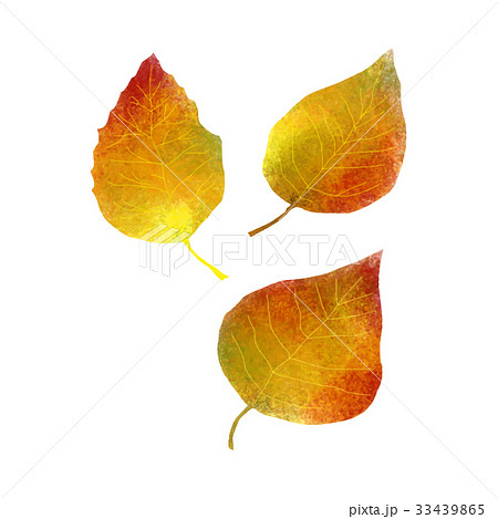 落ち葉のイラスト素材 33439865 Pixta