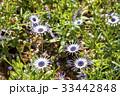 花 植物 屋外の写真 33442848