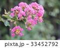 自然 天然 ナチュラルの写真 33452792