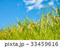 稲 稲作 農業の写真 33459616