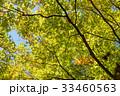 樹木 樹 ツリーの写真 33460563