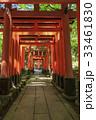 京都・伏見稲荷大社 33461830