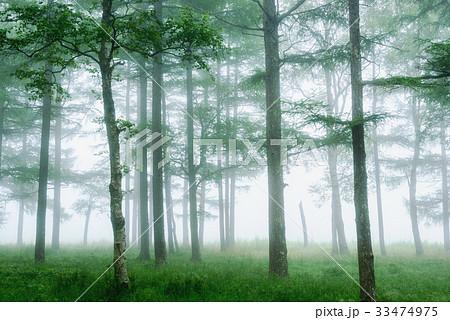 霧の中の木々 33474975