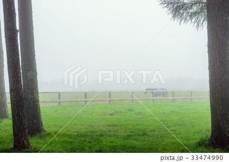 霧の牧場 33474990