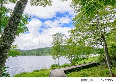 湖畔のハイキングコース 33474995