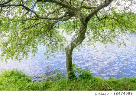 湖畔の樹木 33474998