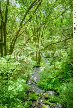 森の小川 33475080