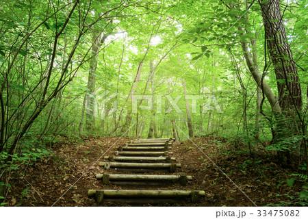 森の中のハイキングトレイル 33475082