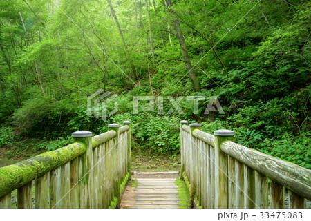 森の中の橋 33475083