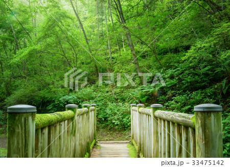 森の中の橋 33475142