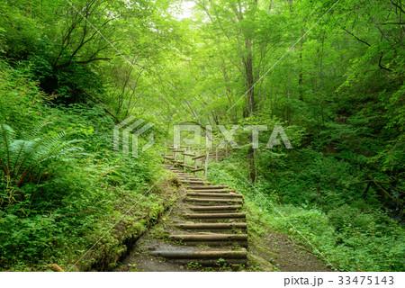 森の中のハイキングトレイル 33475143