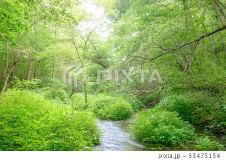森の中の小川 33475154