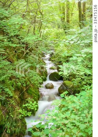森の小川 33475156