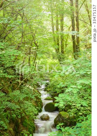 森の小川 33475157