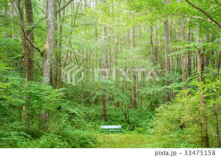森の中のベンチ 33475158