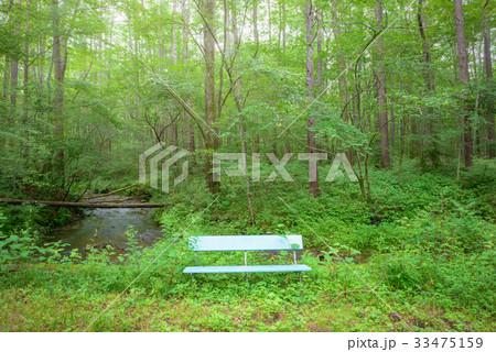 森の中のベンチ 33475159