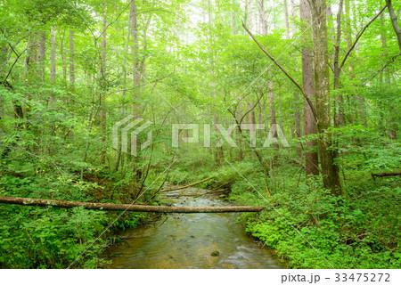 森の小川 33475272