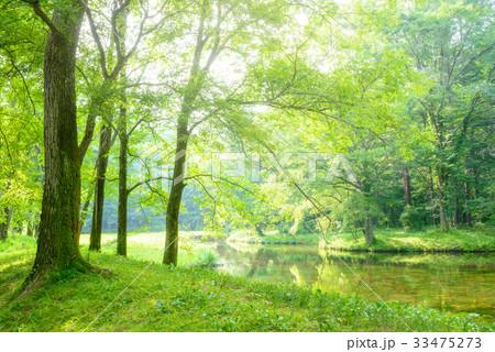 森の中の池 33475273