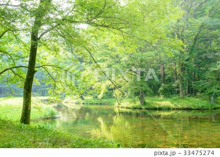 森の中の池 33475274
