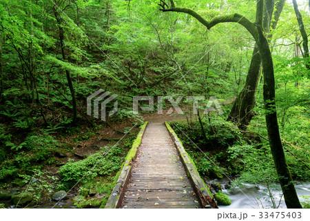 森の中のハイキングコース 33475403