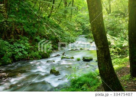 森の渓流 33475407
