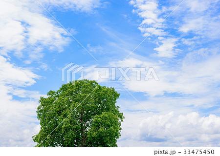 胡桃の木と青空と雲 33475450