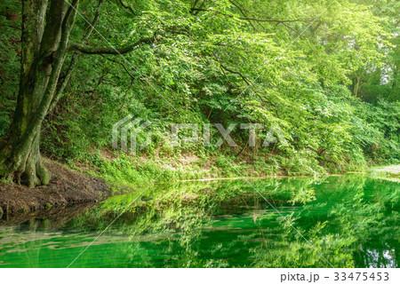 森の中の池 33475453