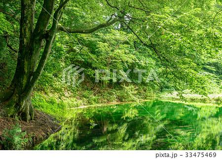 森の中の池 33475469