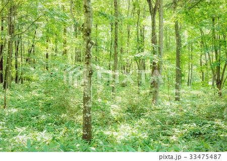 森の中の木漏れ日 33475487