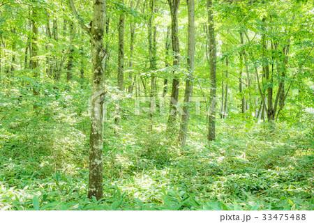 森の中の木漏れ日 33475488