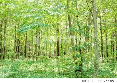 森の中の木漏れ日 33475489