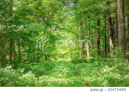 草の茂る道 33475490
