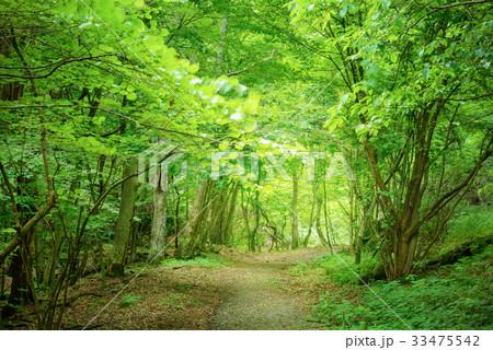 深い森の道 33475542