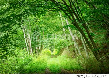 深い森の道 33475543